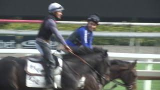 Expert: horse deaths result of 'multiple factors'