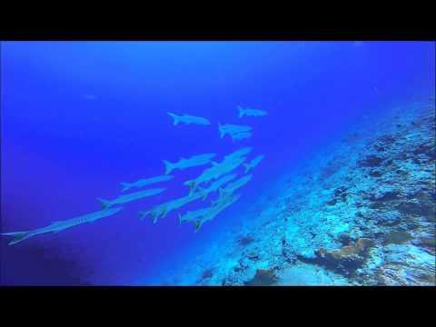 Diving, Biak, Papua