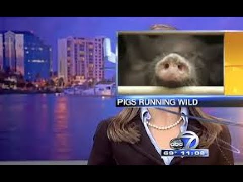 BEST NEWS FAILS FUNNY NEWS BLOOPERS