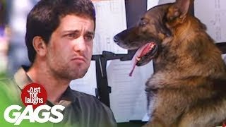 Driving Dog Prank - Just For Laughs Gags