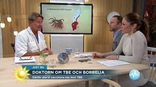 Doktor Mikael om TBE och Borrelia - Nyhetsmorgon (TV4)