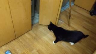 Cat vs shock mat