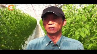 Japan In Kenyan Eyes -  Advanced Tomato Farming Technology