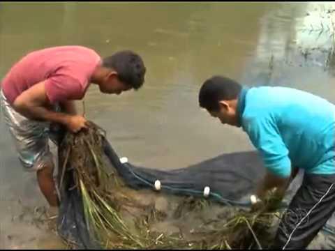 Pesquisadores coletam peixes e plantas para entender ataques de piranhas. BD TO - 08/03/2016