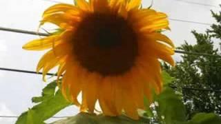 Birthday song - corinne may