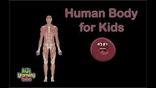The Human Body for Kids/Learn about the Human Body for Children/46 Minute Compilation