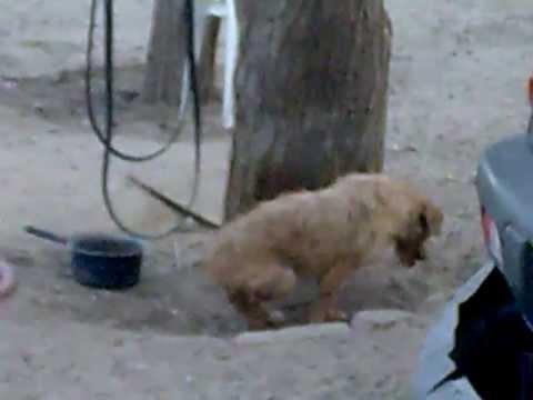 perros peleando solos