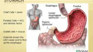 Half Hour to Health-Digestive System (Part 1)