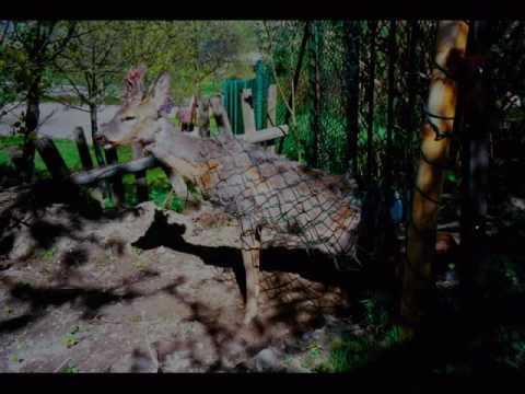 Pies w lesie skutki spotkania z dziką zwierzyną