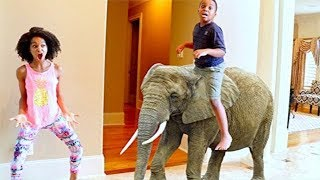 FUNNY ELEPHANT vs Shiloh and Shasha - Onyx Kids