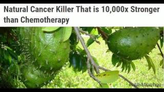 Natural Cancer Killer That is 10,000 times Stronger than Chemotherapy