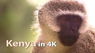 Kenya Stock Footage Highlights in 4K Ultra HD
