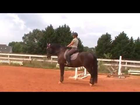 Xxx Mp4 Randi Thompson 2 Horses 2 Levels Halts From Trot And Walk Dressage 3gp Sex