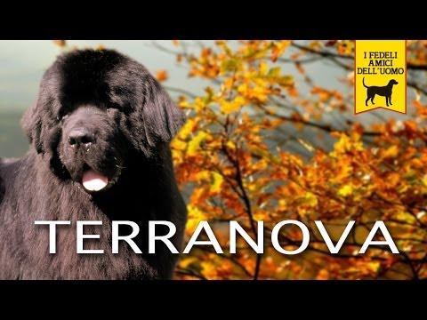 TERRANOVA NEWFOUNDLAND trailer documentario razza canina