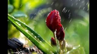 "Suara Hujan "" suara haru hutan, relaksasi, suara alam, meditasi, tidur pulas, menenangkan"""