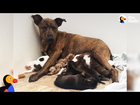 Growling Stray Dog Protecting Her Puppies Slowly Trusts Rescuers The Dodo