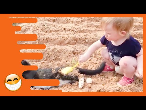 Baby and Cat are Best Friends Funny Pets Videos