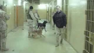 Iraq; More Photos of Abu Ghraib