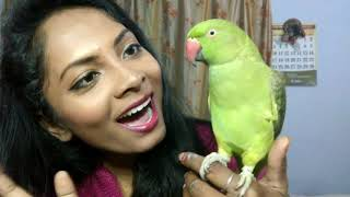 || HOW TO TRAIN YOUR INDIAN RINGNECK PARROT TO TALK || MY 10 MONTH MITTHU TAKING BATH IN WINTERS ||