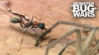 Epic Ant Battles #2   MONSTER BUG WARS