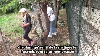 les jardins de julien operation fourmi