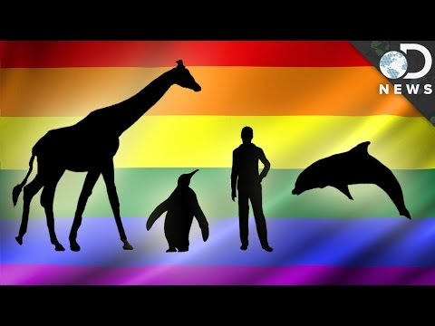 How Common Are Gay Animals?