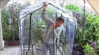 How to Build a $17.50 Greenhouse Without Any Tools