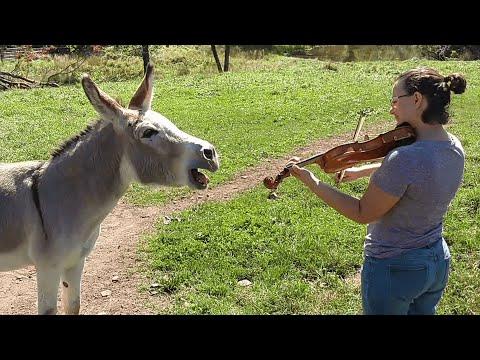 Xxx Mp4 Donkey Loves Sound Of Violin 3gp Sex