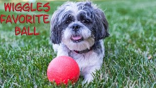 WIGGLES Backyard Play Date Assistant Finds Wiggles Favorite Puppy Ball Funny Dog Video