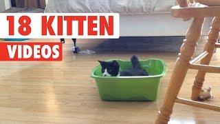 18 Funny Kitten Videos Compilation 2017