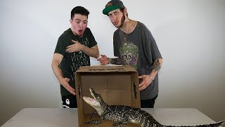 CRAZY WHAT'S IN THE BOX CHALLENGE!! (ft. FaZe Banks)