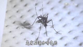 【發現】20151031 - 不要吻我 - 登革熱人蚊戰爭