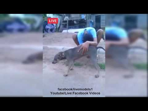 live dog sexy video on facebook | Live Facebook Videos