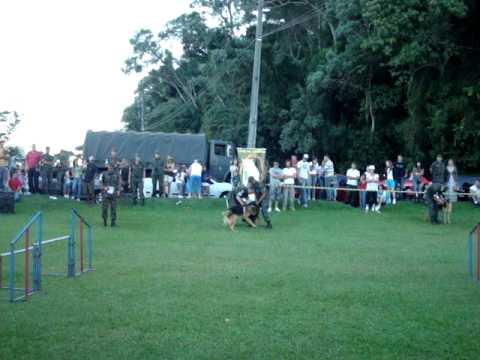 Briga de cachorro no Barigui