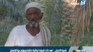 العم مبارك.. مزارع يعشق النخيل رغم عمره الذي تجاوز الـ 80 عاما