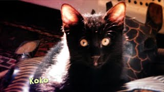 CBS Cares - Charles Osgood on Adopting a Pet