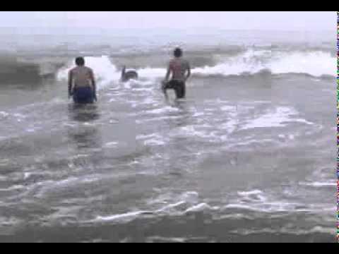 Xxx Mp4 Playa Culebras Mp4 3gp Sex