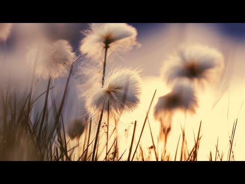 Morning Instrumental Relaxing Background Music