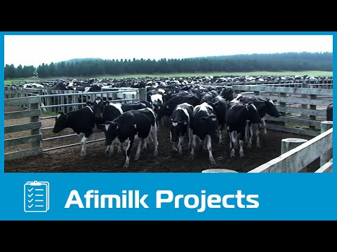 afimilk® - The world's largest dairy farm project in Vietnam