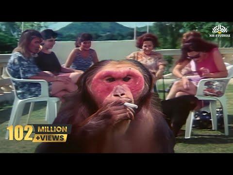 Xxx Mp4 Funny Pets Comedy Scene Kundan Movie 3gp Sex