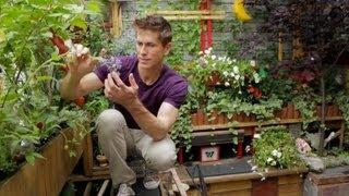 Tiny Williamsburg hipster garden - Urban Gardener video