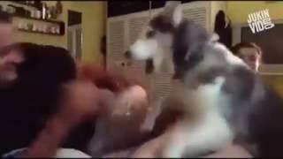 انضر ماذا فعل الكلب لصديقتة. لان كان ابوهة يحاول قتلها وفاء الكلاب لاصدقائة