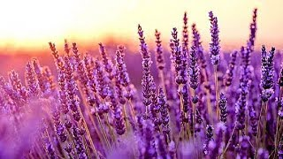 Relaxing Music for Stress Relief. Meditation Music. Sleep Music. Healing Therapy, Spa