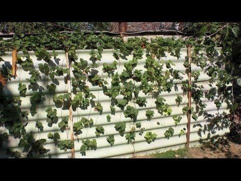 Вертикальная клубника выращивание 26