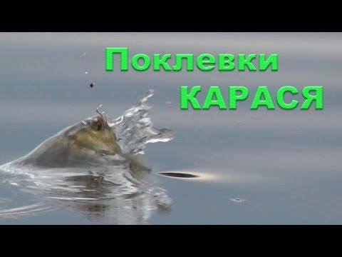 ютуб ловля карася на поплавковую удочку