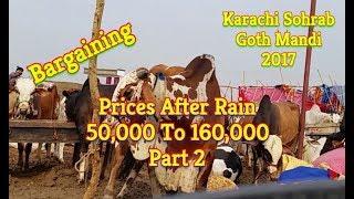 Cow Mandi 2017 | Karachi Sohrab Goth Mandi 2017 | Video 28