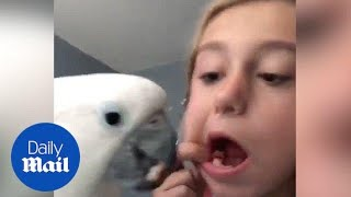 Bird Pulls Out Little Girl's Loose Tooth - Daily Mail