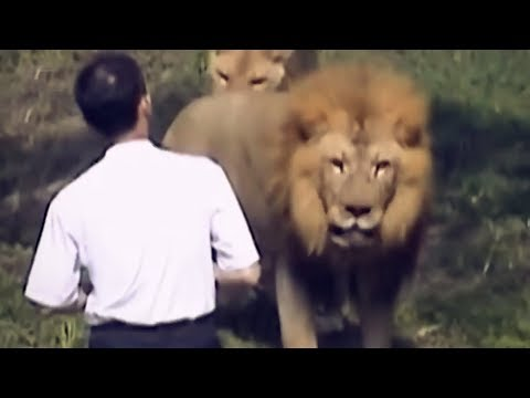 Xxx Mp4 When Zoo Animals Attack 3gp Sex
