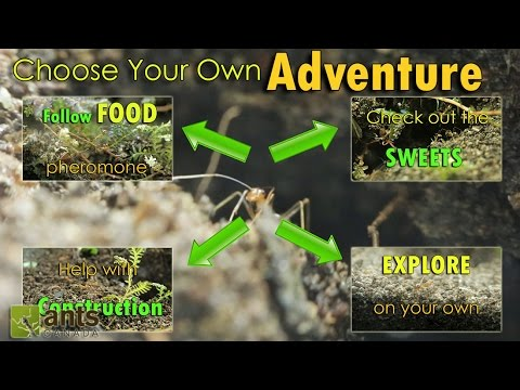 Xxx Mp4 YOU CONTROL THIS STORY A DAY IN THE LIFE OF AN ANT Interactive Video 3gp Sex