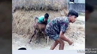 নাটক গরু চোর mojar bangla